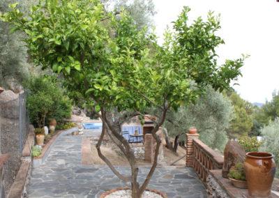 G09 - Appelsintræ.