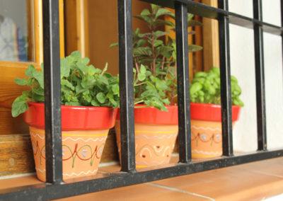 B02 -  Fresh spicies in the kitchen window.