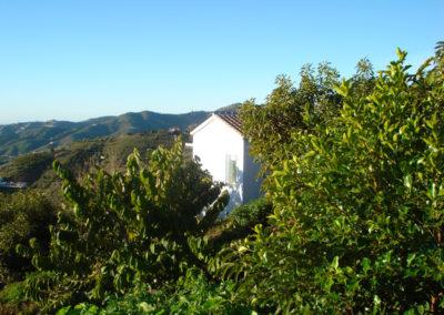 G04 - Huset mellem advokado- og frugttræer.