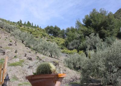 G49 - Omgivet af olivenlunde og advokadotræer.