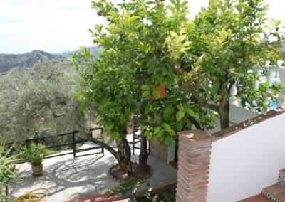G34 - Have med frugttræer