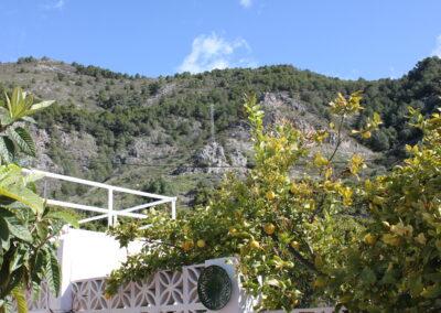 R44 - Eget citrontræ og udsigt til bjergene.