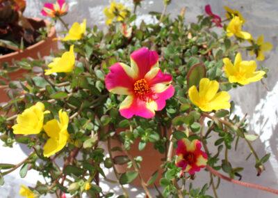 R357 Blomster 2