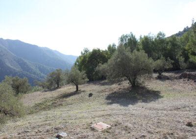 G362 - Plot of 17,000 sqm including olives.